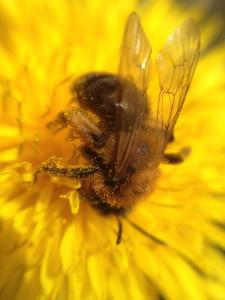 Med macrot går det att få så här närgångna bilder på insekter