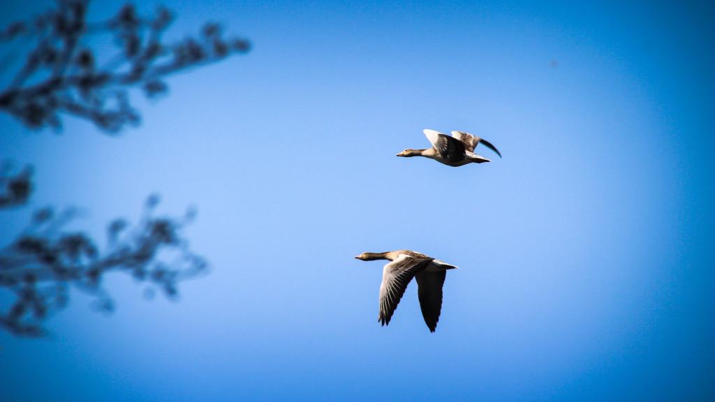 hackeberga_birds-1