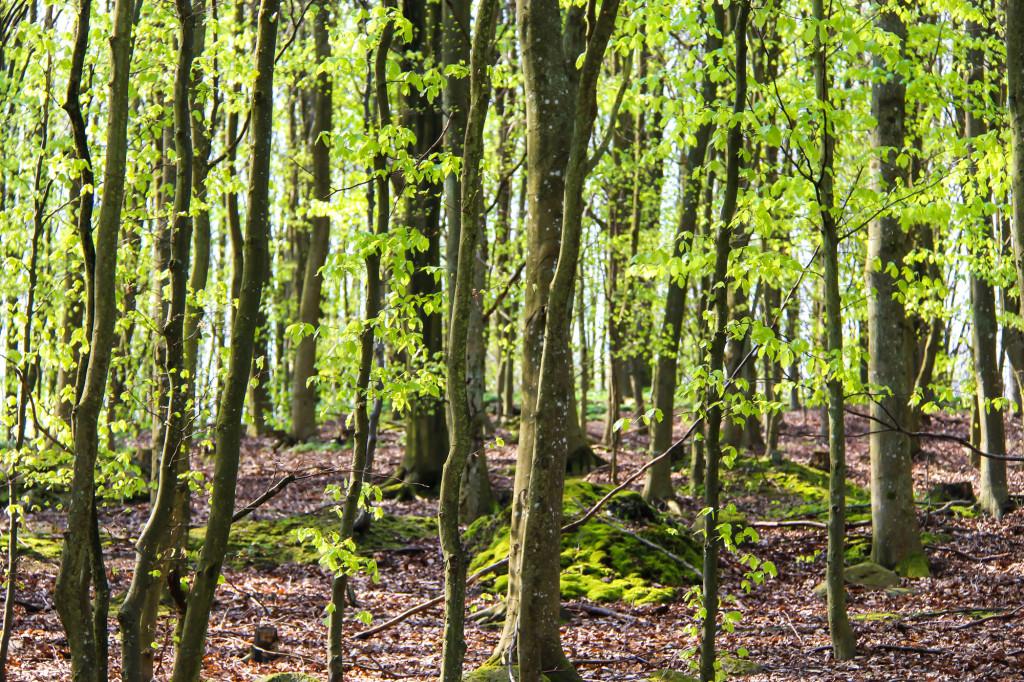 hackeberga_skog1-1