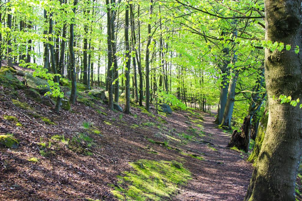 hackeberga_skog3-1