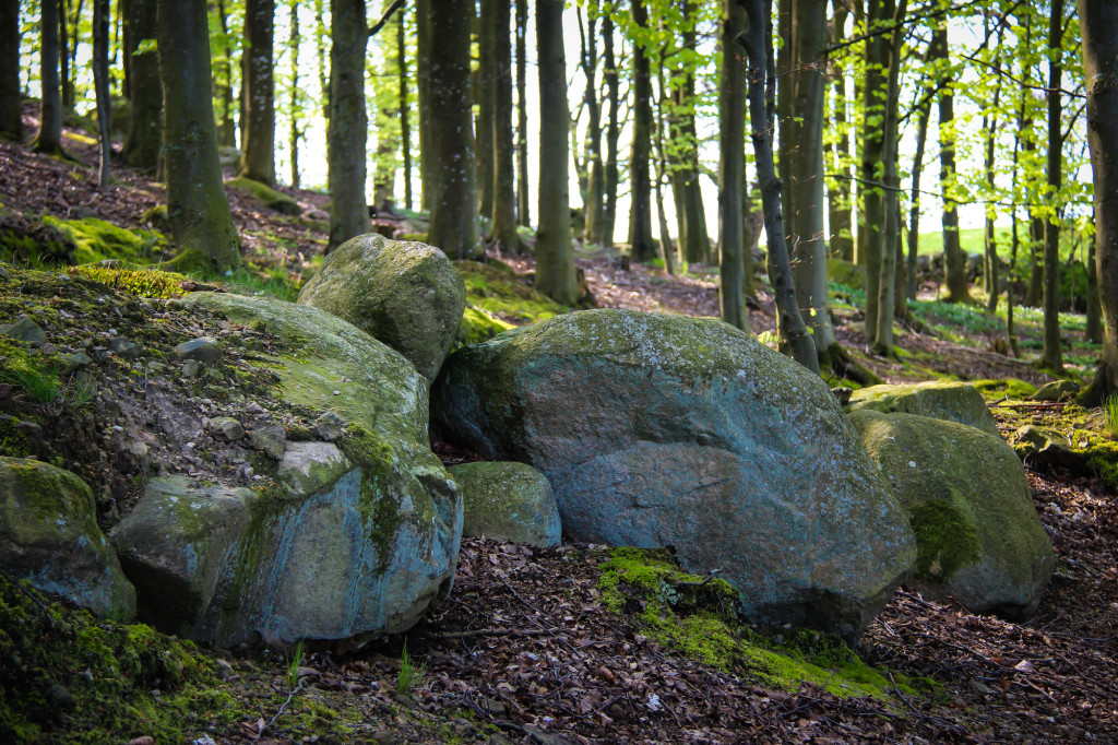 hackeberga_skog4-1